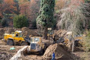 dm-sequoia-20142014octobreoctobre31-007
